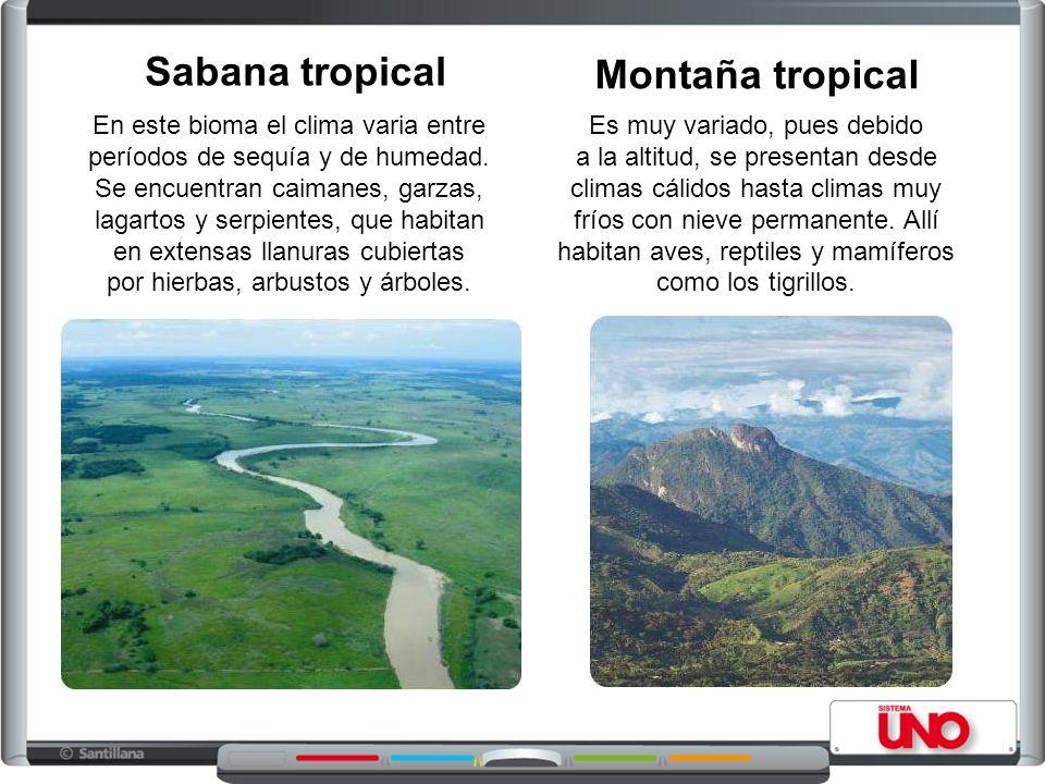 Sabana tropical Montaña tropical
