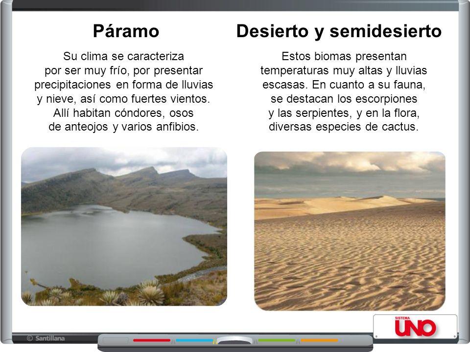 Desierto y semidesierto