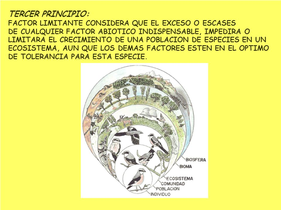TERCER PRINCIPIO: FACTOR LIMITANTE CONSIDERA QUE EL EXCESO O ESCASES