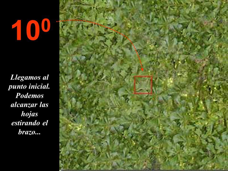 100 Llegamos al punto inicial. Podemos alcanzar las hojas estirando el brazo...