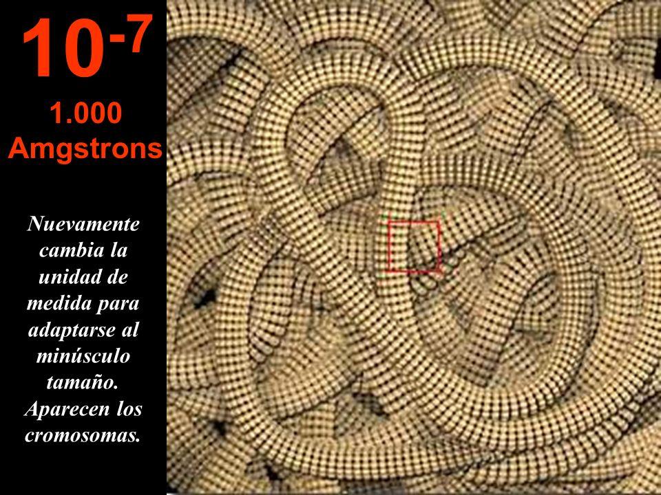 10-71.000 Amgstrons.Nuevamente cambia la unidad de medida para adaptarse al minúsculo tamaño.