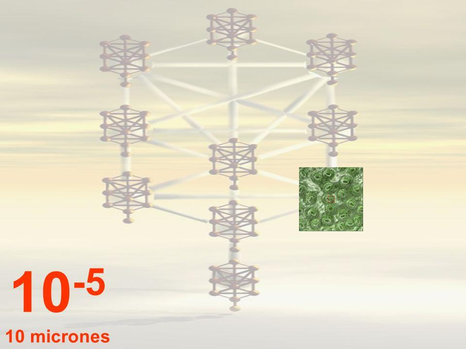 10-5 10 micrones