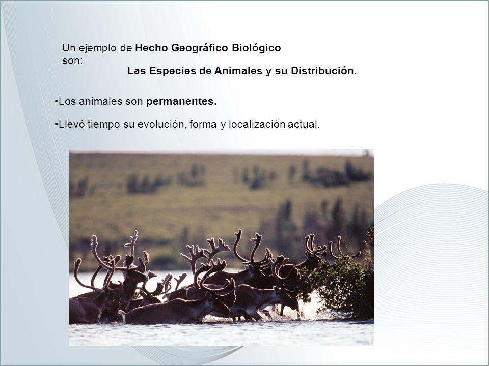 Un ejemplo de Hecho Geográfico Biológico son: