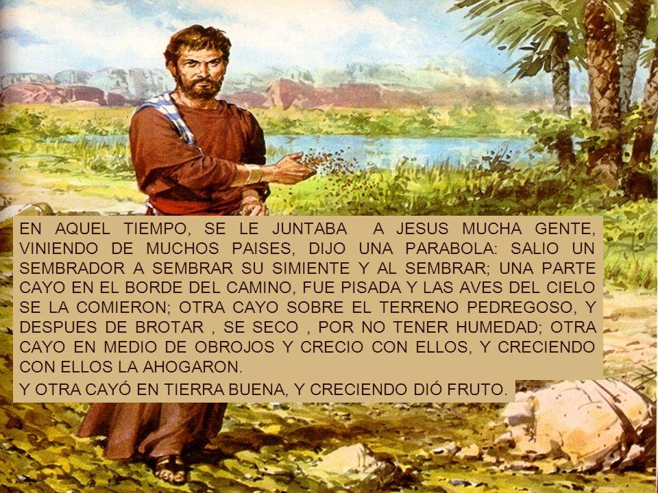 EN AQUEL TIEMPO, SE LE JUNTABA A JESUS MUCHA GENTE, VINIENDO DE MUCHOS PAISES, DIJO UNA PARABOLA: SALIO UN SEMBRADOR A SEMBRAR SU SIMIENTE Y AL SEMBRAR; UNA PARTE CAYO EN EL BORDE DEL CAMINO, FUE PISADA Y LAS AVES DEL CIELO SE LA COMIERON; OTRA CAYO SOBRE EL TERRENO PEDREGOSO, Y DESPUES DE BROTAR , SE SECO , POR NO TENER HUMEDAD; OTRA CAYO EN MEDIO DE OBROJOS Y CRECIO CON ELLOS, Y CRECIENDO CON ELLOS LA AHOGARON.