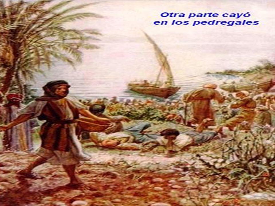 Y otra vez Jesúcristo se puso a enseñar a orillas del mar