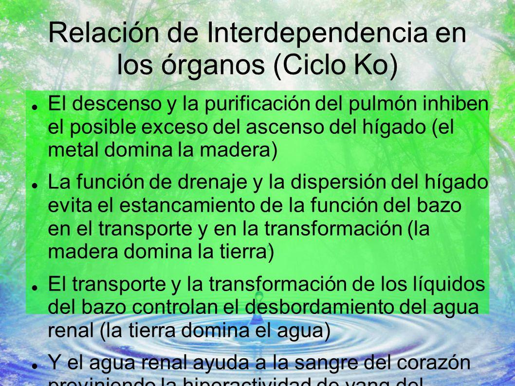 Relación de Interdependencia en los órganos (Ciclo Ko)