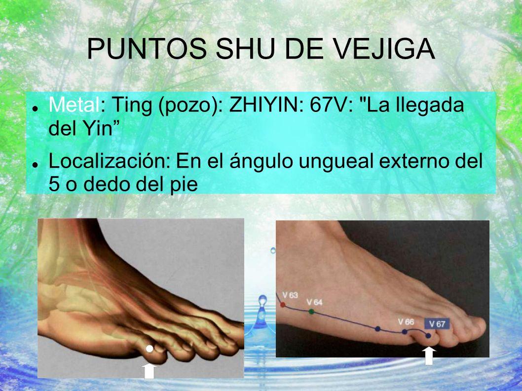 PUNTOS SHU DE VEJIGA Metal: Ting (pozo): ZHIYIN: 67V: La llegada del Yin Localización: En el ángulo ungueal externo del 5 o dedo del pie.