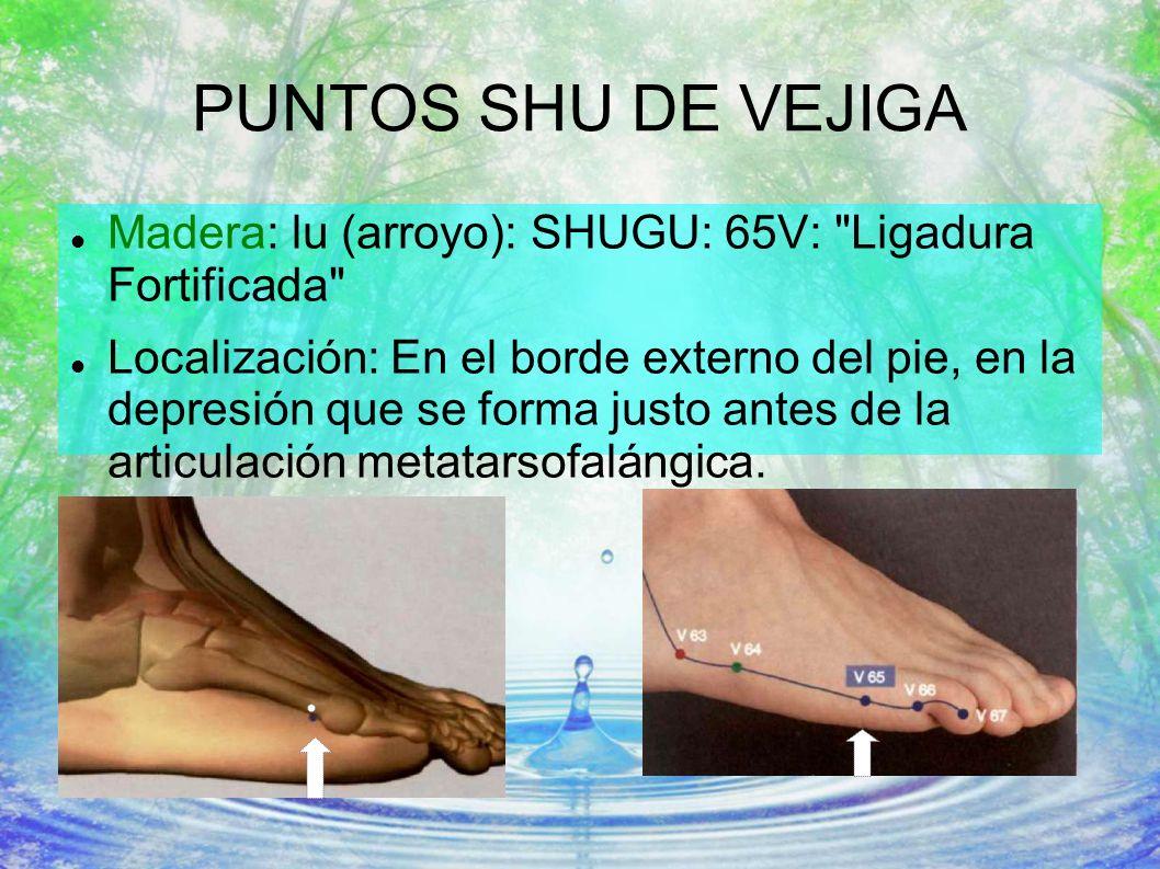 PUNTOS SHU DE VEJIGA Madera: lu (arroyo): SHUGU: 65V: Ligadura Fortificada