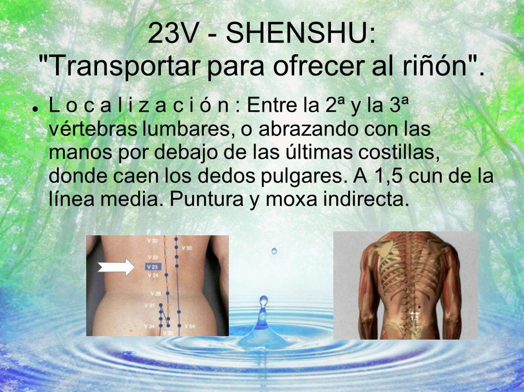 23V - SHENSHU: Transportar para ofrecer al riñón .