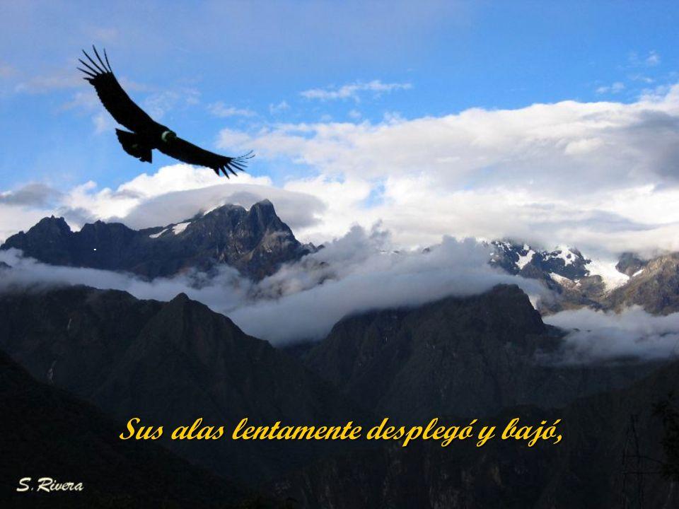 Sus alas lentamente desplegó y bajó,
