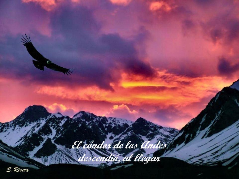 El cóndor de los Andes descendió, al llegar