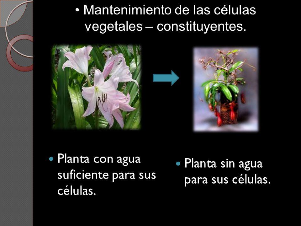 Mantenimiento de las células vegetales – constituyentes.