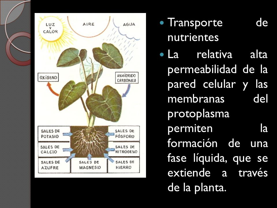 Transporte de nutrientes