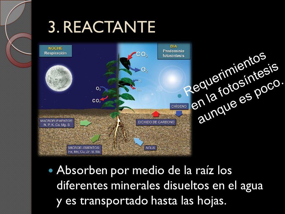 3. REACTANTE Requerimientos en la fotosíntesis aunque es poco.