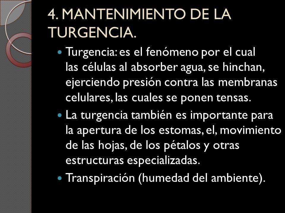 4. MANTENIMIENTO DE LA TURGENCIA.