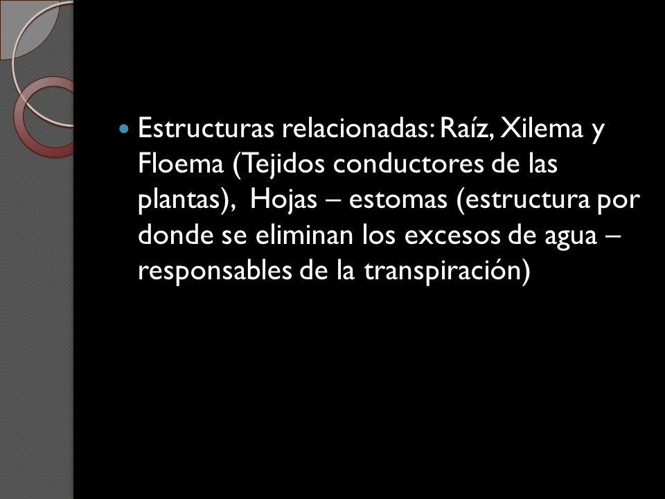 Estructuras relacionadas: Raíz, Xilema y Floema (Tejidos conductores de las plantas), Hojas – estomas (estructura por donde se eliminan los excesos de agua – responsables de la transpiración)