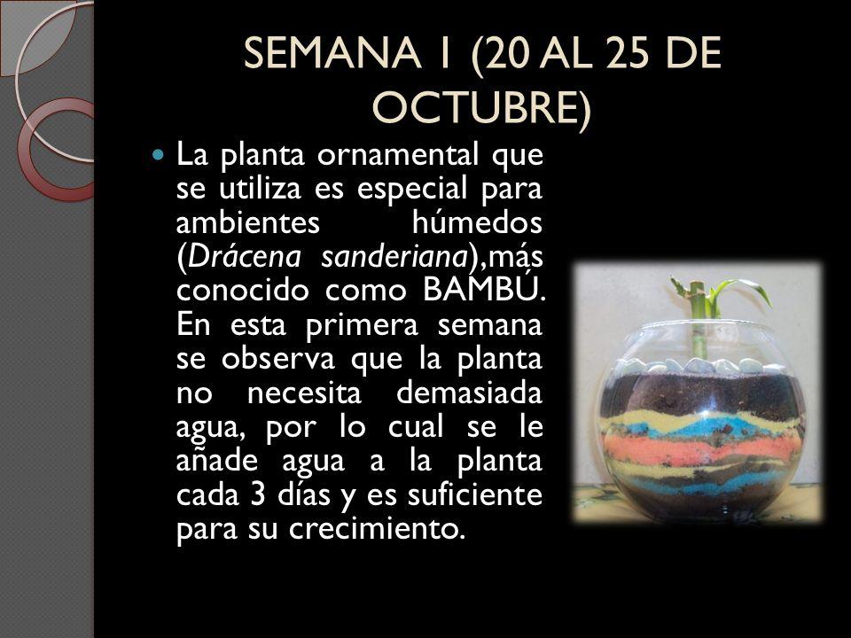 SEMANA 1 (20 AL 25 DE OCTUBRE)