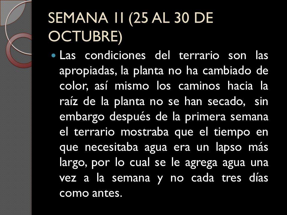 SEMANA 1I (25 AL 30 DE OCTUBRE)