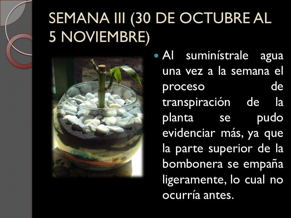 SEMANA III (30 DE OCTUBRE AL 5 NOVIEMBRE)