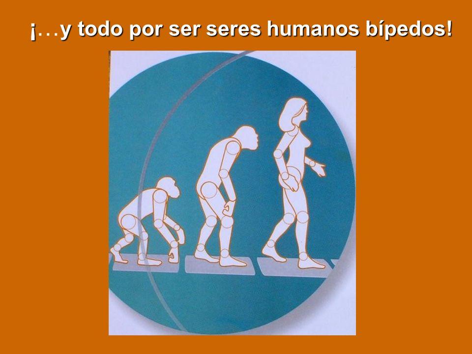 ¡…y todo por ser seres humanos bípedos!