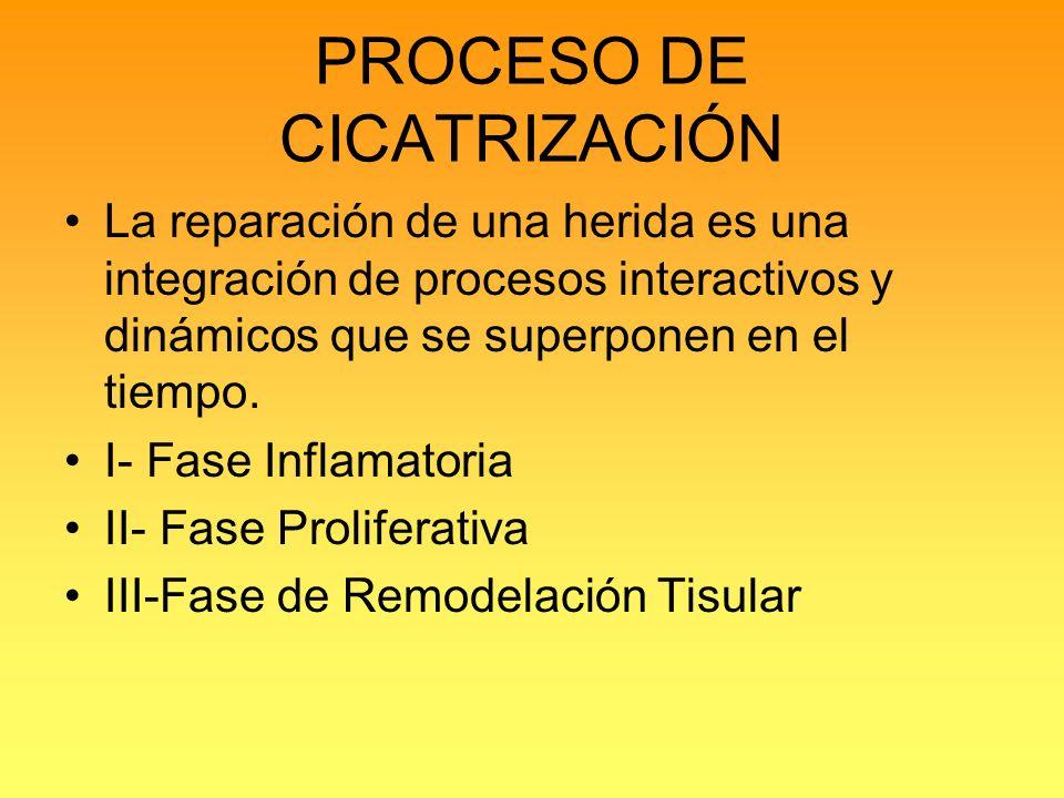 PROCESO DE CICATRIZACIÓN