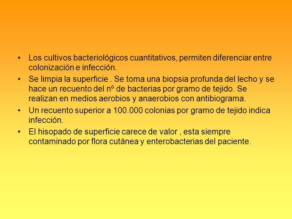 Los cultivos bacteriológicos cuantitativos, permiten diferenciar entre colonización e infección.