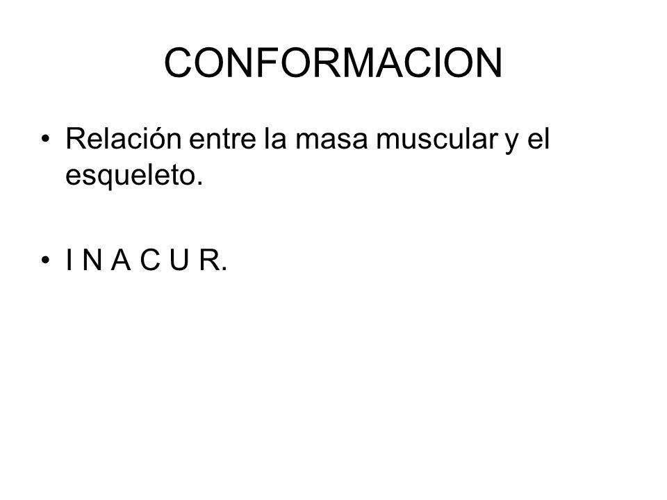 CONFORMACION Relación entre la masa muscular y el esqueleto.