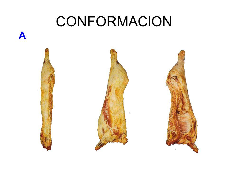 CONFORMACION A
