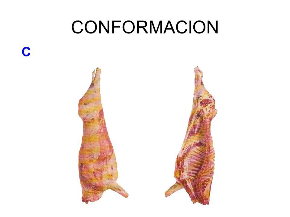 CONFORMACION C