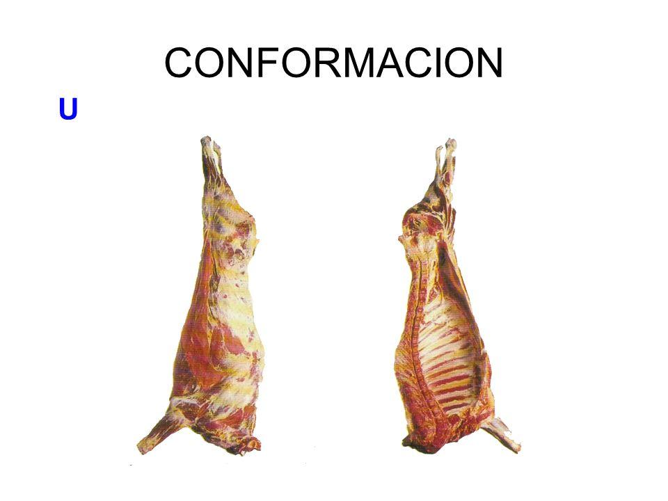 CONFORMACION U