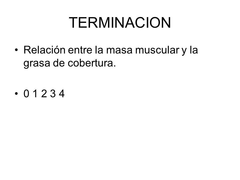 TERMINACION Relación entre la masa muscular y la grasa de cobertura.