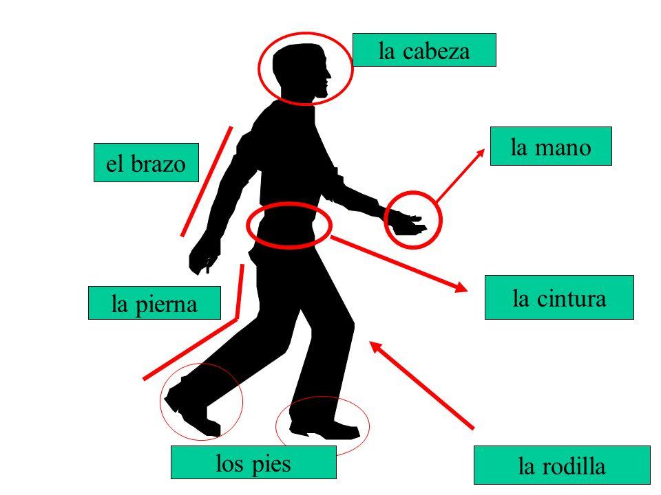 la mano la cabeza El brazo el brazo la cintura la pierna la rodilla los pies