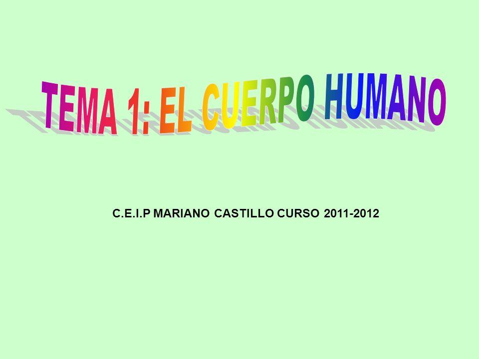 C.E.I.P MARIANO CASTILLO CURSO 2011-2012