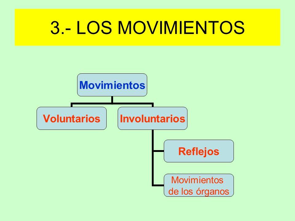 3.- LOS MOVIMIENTOS
