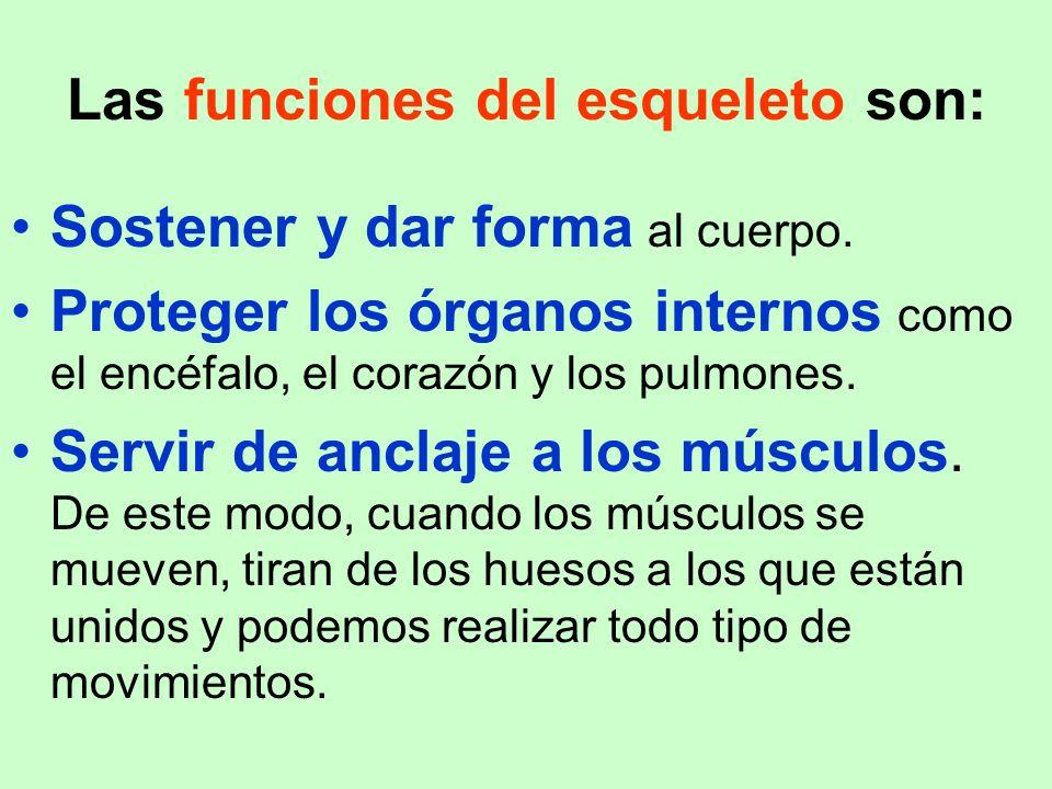 Las funciones del esqueleto son: