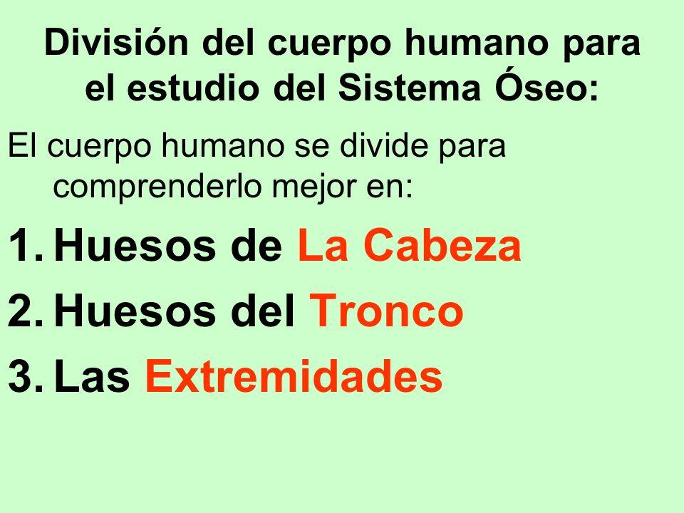 División del cuerpo humano para el estudio del Sistema Óseo: