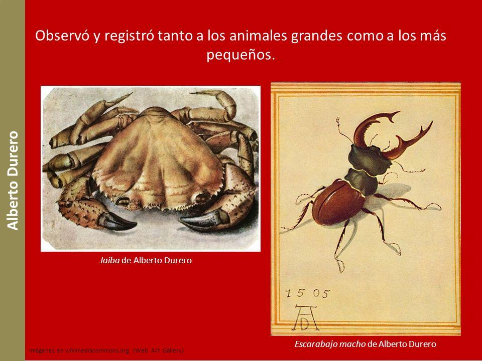 Observó y registró tanto a los animales grandes como a los más pequeños.