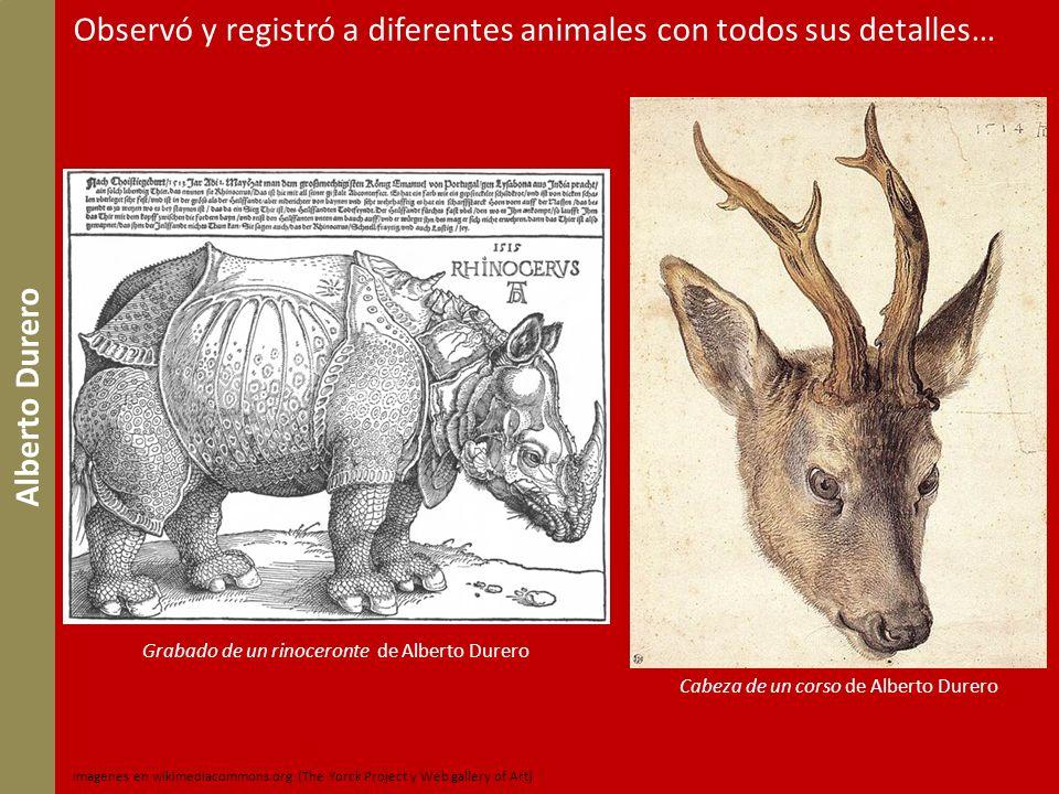 Observó y registró a diferentes animales con todos sus detalles…