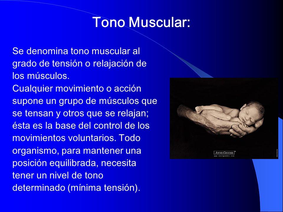 Tono Muscular: Se denomina tono muscular al