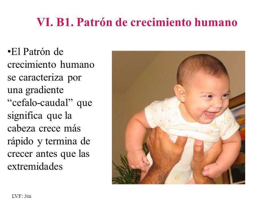 VI. B1. Patrón de crecimiento humano
