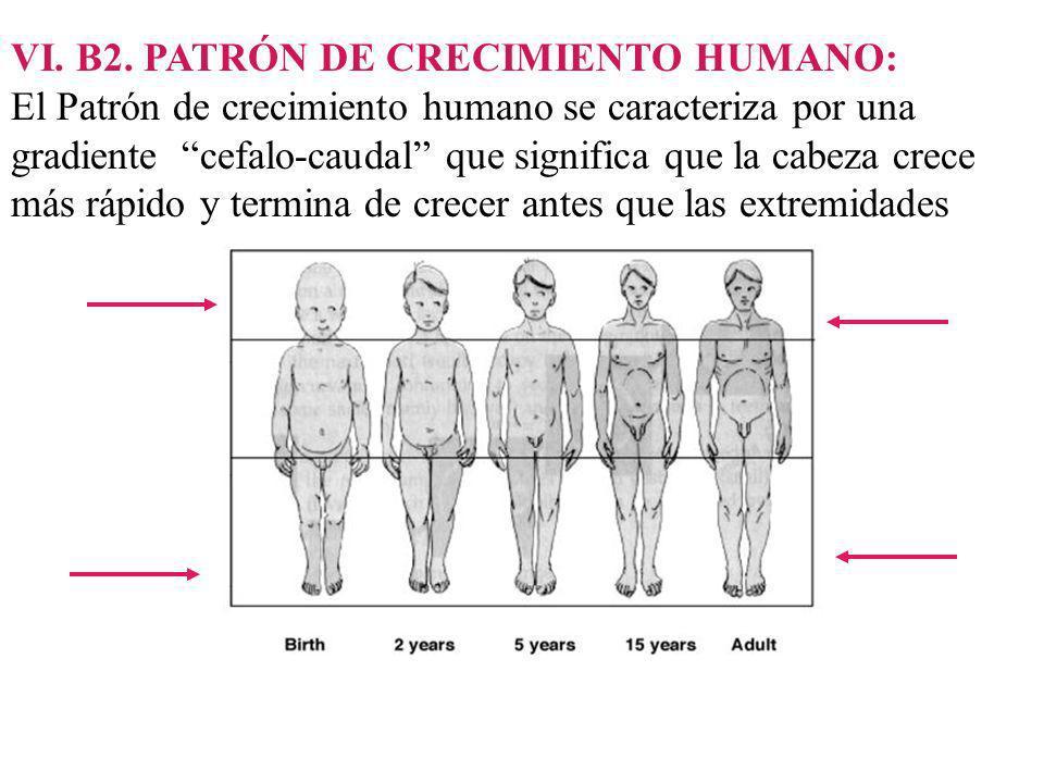 VI. B2. PATRÓN DE CRECIMIENTO HUMANO: