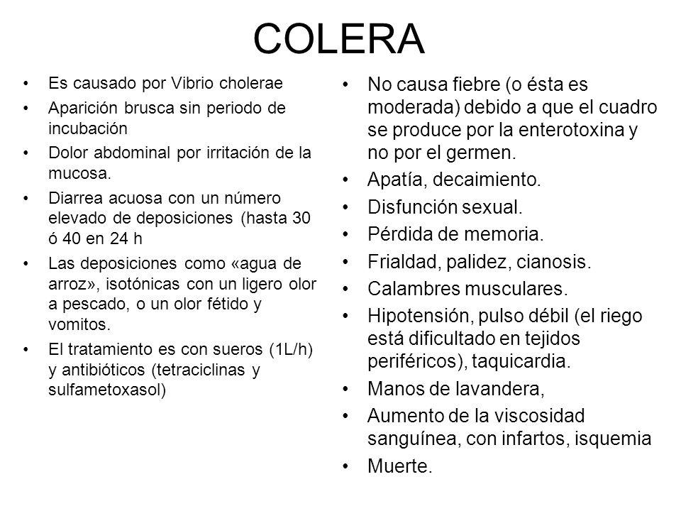 COLERA Es causado por Vibrio cholerae. Aparición brusca sin periodo de incubación. Dolor abdominal por irritación de la mucosa.
