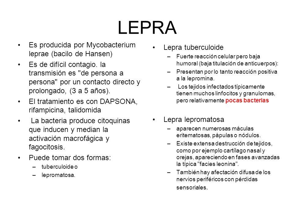 LEPRA Es producida por Mycobacterium leprae (bacilo de Hansen)