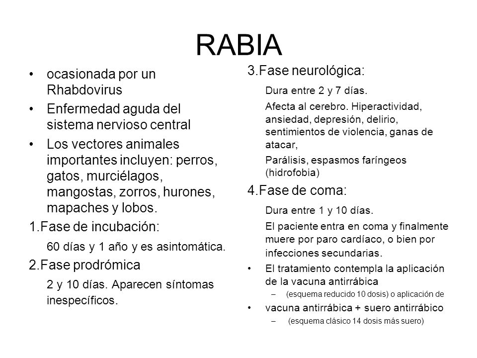 RABIA 3.Fase neurológica: ocasionada por un Rhabdovirus