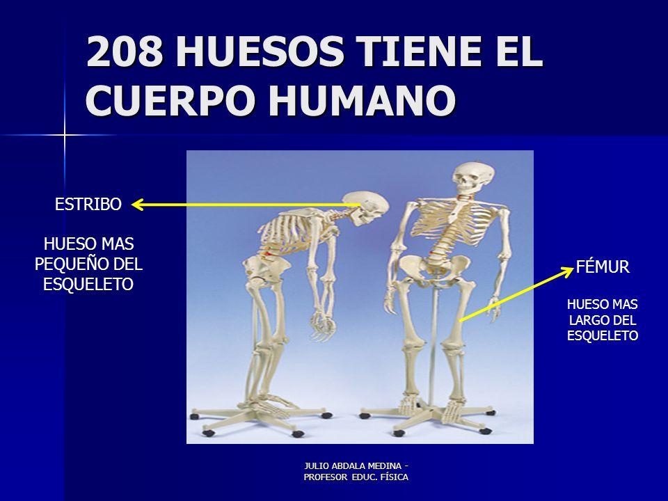 208 HUESOS TIENE EL CUERPO HUMANO
