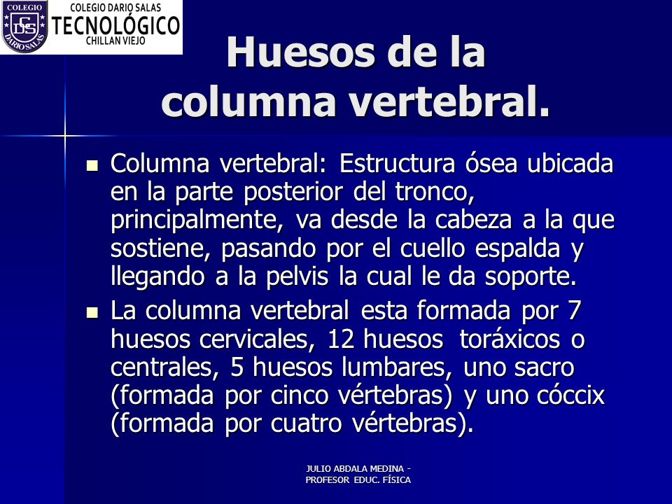 Huesos de la columna vertebral.