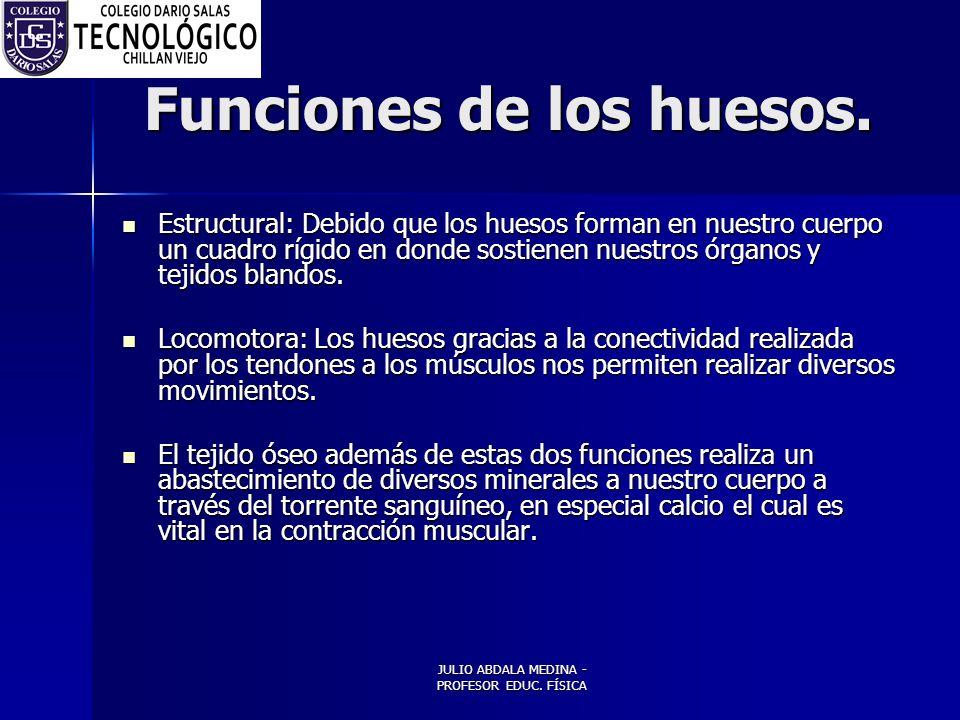Funciones de los huesos.