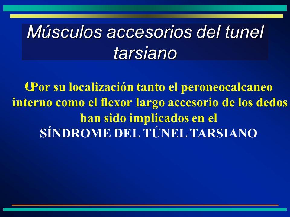 Músculos accesorios del tunel tarsiano