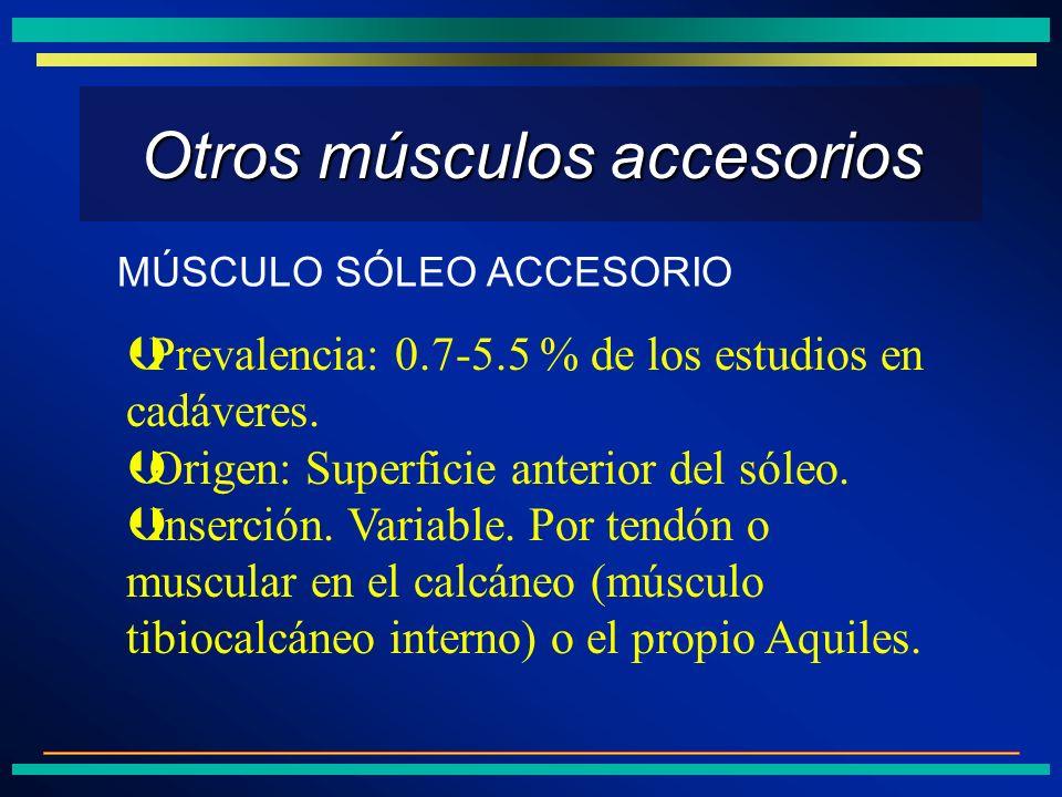 Otros músculos accesorios
