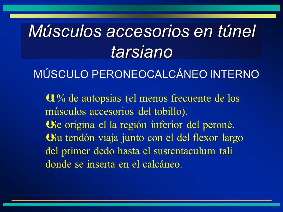 Músculos accesorios en túnel tarsiano